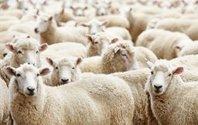 停了医疗广告,百度要来教育薅羊毛?